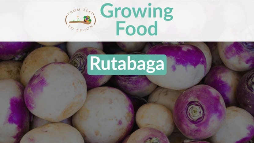 Rutabaga blog post