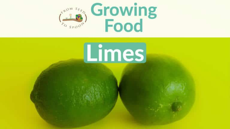 Limes blog post