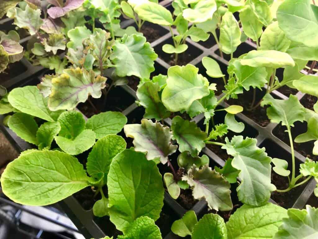 Indoor baby plants