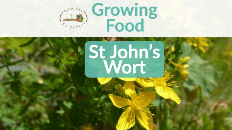 St John's Wort blog post