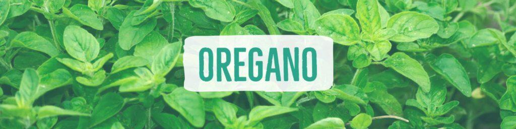 oregano-header
