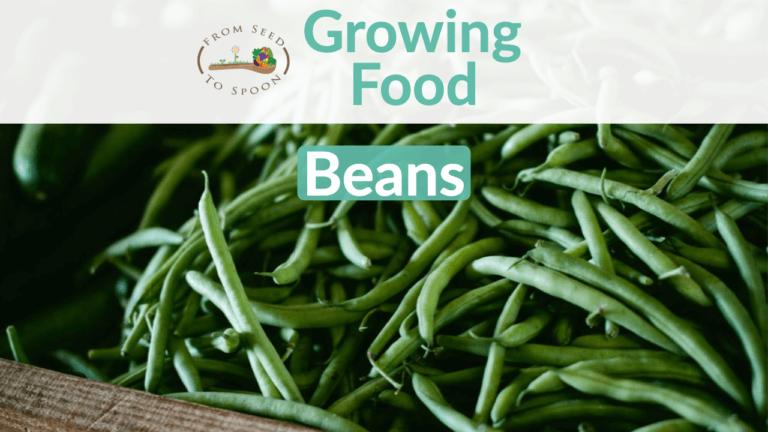 Beans blog post
