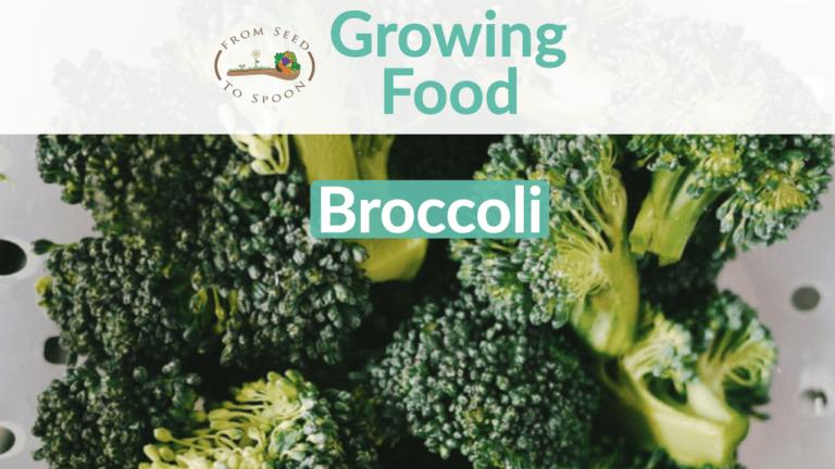 Broccoli blog post