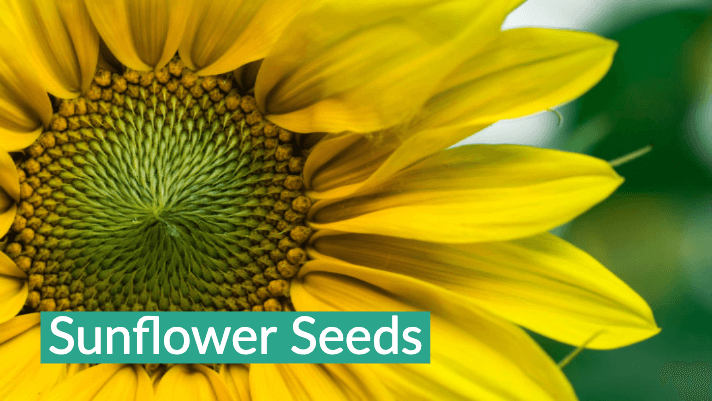Top 5 Plants You Can Grow in Your Garden to Help Your Eyes - From Seed to  Spoon Vegetable Garden Planner Mobile App