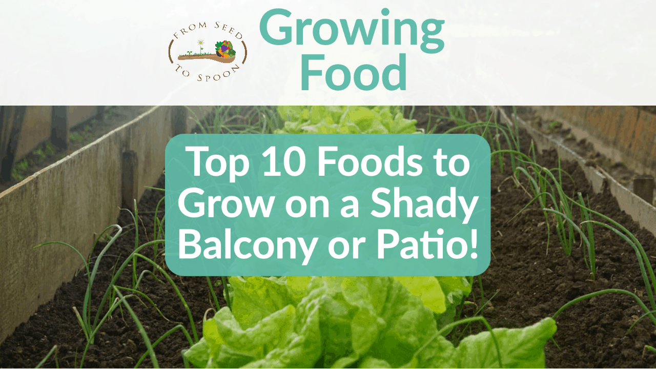 The Top 10 Foods To Grow On Your Shady Balcony Or Patio From Seed To Spoon Vegetable Garden Planner Mobile App